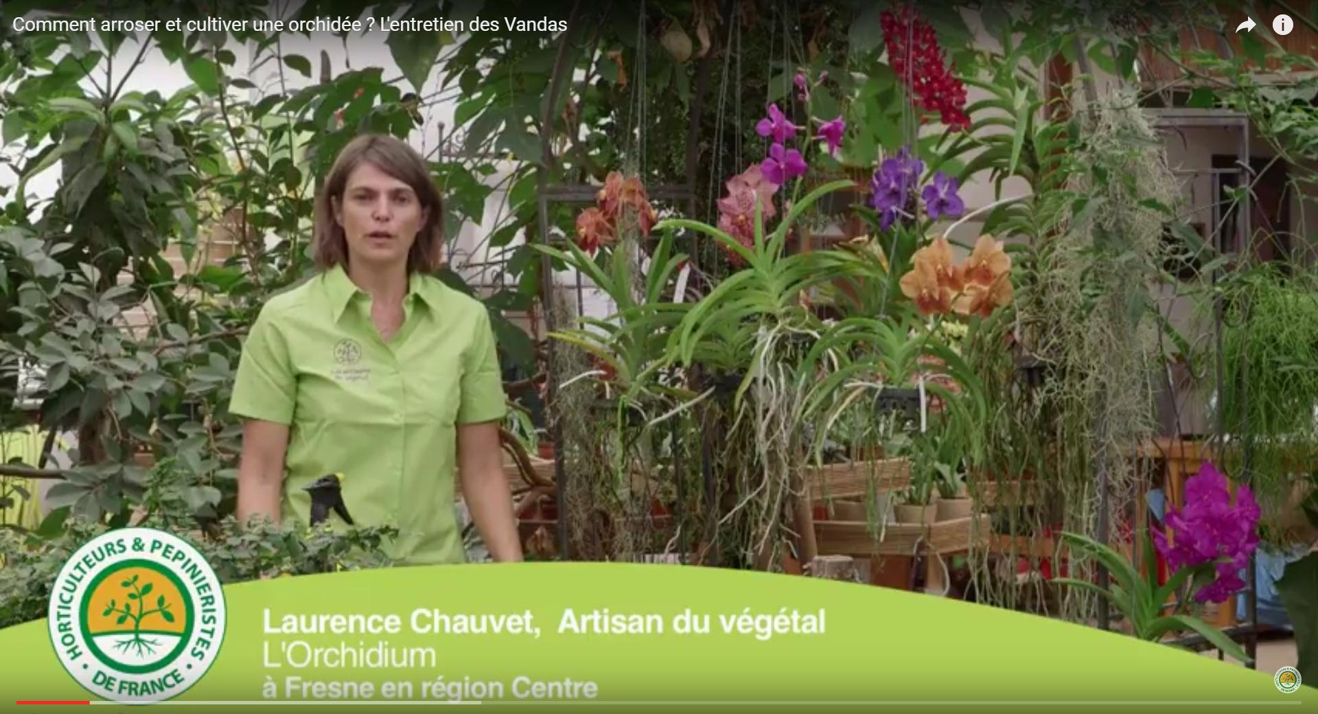 Comment Planter Une Orchidée comment arroser et cultiver une orchidée ? l'entretien des